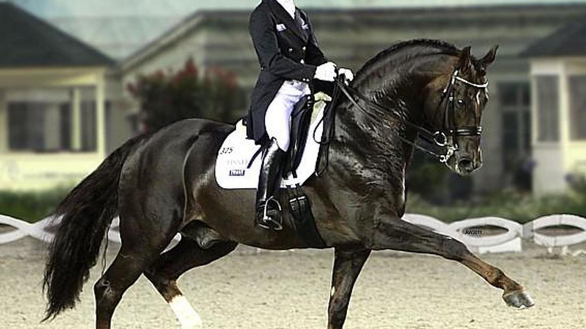 A horse called Damon Hill, a medallist at McLaren
