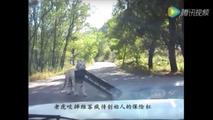 Siberian tiger eats a Volkswagen Jetta