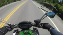 Canadian motorcyclist nearly collides with Moose