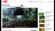 New Beetle: Besouro detona o Youtube em comercial
