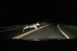 Subaru BRZ Driver Nearly Destroys Deer on Mountain Road [Video]