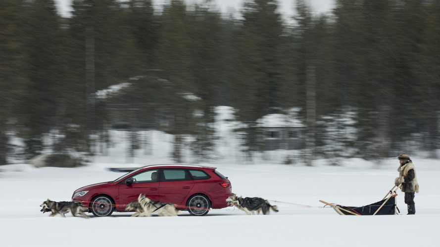 SEAT Leon Cupra, kurtlar tarafından çekilen kızağa karşı