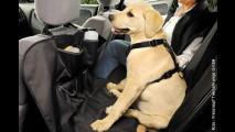 Sicher reisen mit Hund