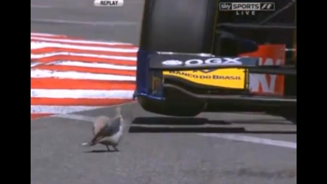 Vídeo: o pombo mais rápido do mundo está em Mônaco